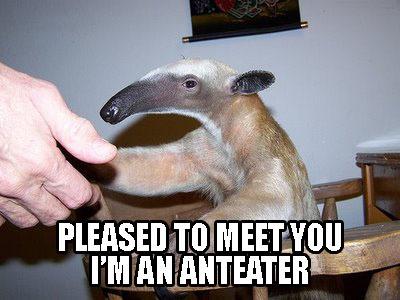 anteater1.jpg